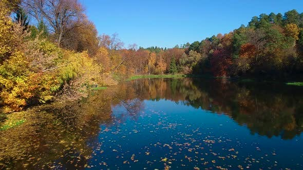 Cover Image for Colorful Autumn Forest Wood on the Lake