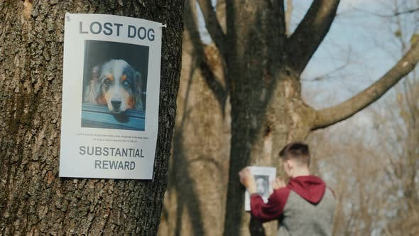 Thumbnail for Leaflet About the Missing Dog, in the Background a Man To Glue Posters