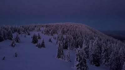 Blue Frozen Forest in Cold Winter Evening