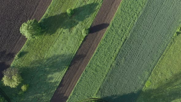 Thumbnail for Above agricultural land bordered with tress 4K drone footage
