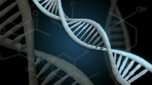 DNA Double Helix Using Formulas