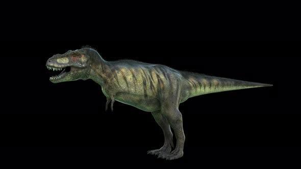 Thumbnail for Tyrannosaurus Dinosaur 4K