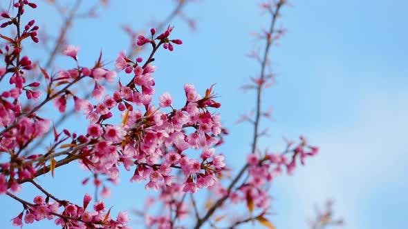 Thumbnail for Frühlingsblüte