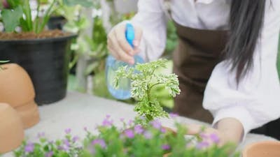 Close up spraying plants of standing woman, working in garden with spray