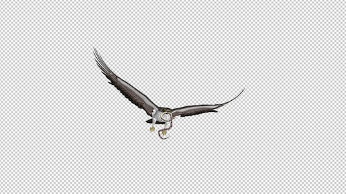 Snake Eagle with Caught Serpent - 4K Flying Transition - II