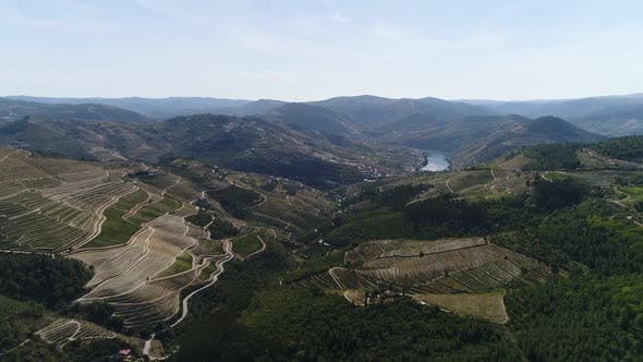 Thumbnail for Aerial Footage of Beautiful Vineyards on Mountains