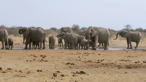 Elephants drinking at waterhole, Hwange, Africa wildlife