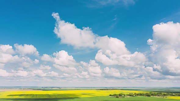 Vue Aérienne De Paysage Agricole Avec Floraison Floraison De Colza Oilagineux Dans Champ Prairie Dans