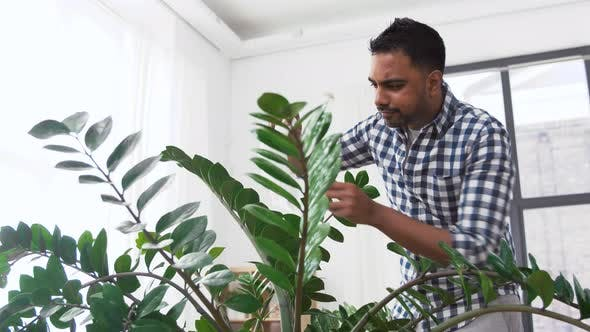 Thumbnail for Indian Man Cleaning Houseplant at Home 99