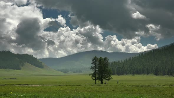Majestic Pine Forest and Beauty Green Meadow in Unmanned Mountains With Large Valley Geography