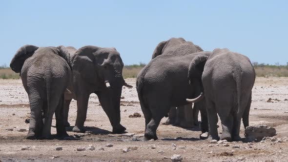 Thumbnail for Herd of elephants around an almost dry waterhole