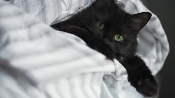 Thumbnail for Sleepy Black Cat with Green Eyes Lies Wrapped in a Blanket with Its Paws Out