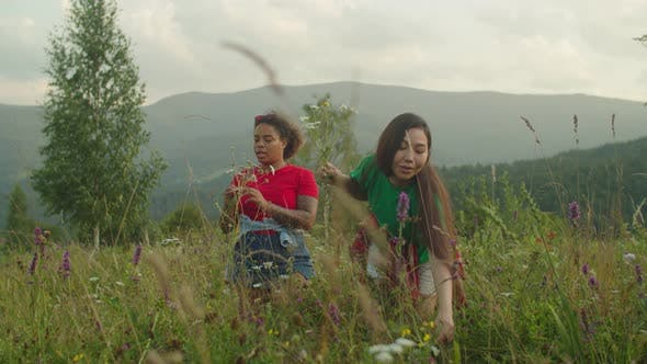 Cheerful Pretty Multiracial Female Travelers Collecting Wild Flowers and Herbs on Mountain Hill