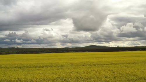 Rapeseed Plantations Under Cloudy Sky 3
