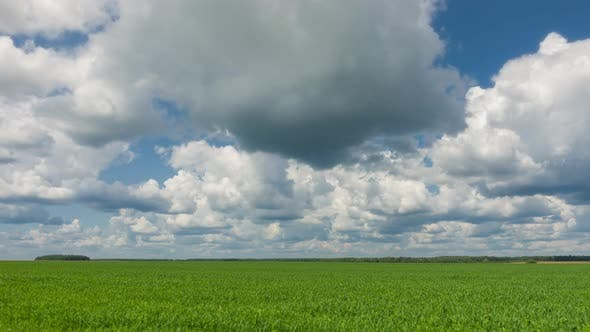 Thumbnail for Beautiful Agriculture Field, Qualitative Time Lapse, No Flicker