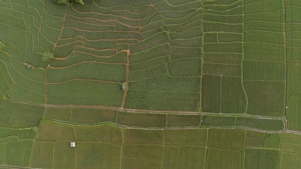 Thumbnail for Luftaufnahme des Anbaufeldes, Malang, Indonesien.