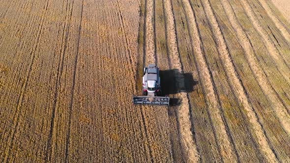 Thumbnail for Aerial View: Combine Harvester Harvesting Ripe Corn on Harvest Field