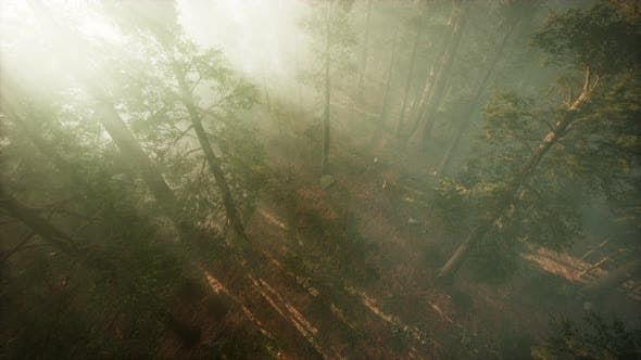 Thumbnail for Drone Breaking Through the Fog To Show Redwood and Pine Tree