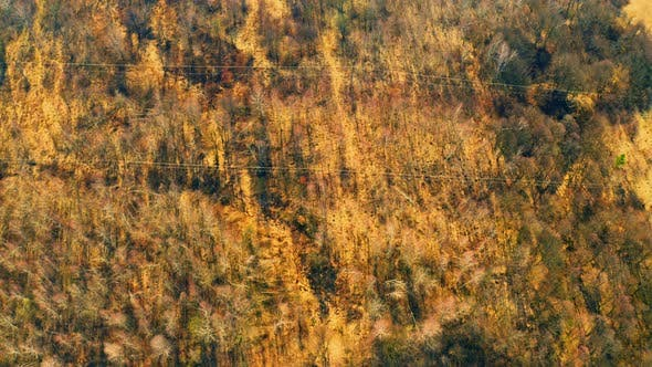 Thumbnail for Drone Flies Above Forest