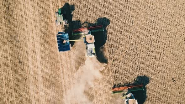 Harvester and Tractor Harvests Wheat on a Field, Aerial View