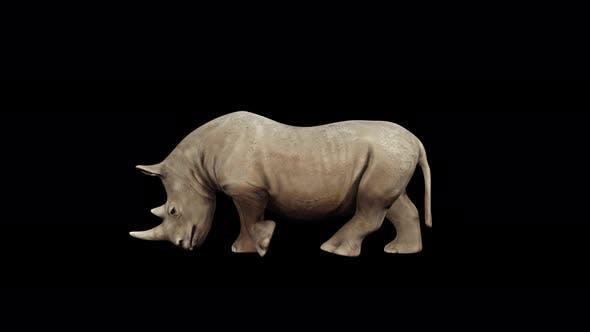Thumbnail for 4K Rhinoceros Walk