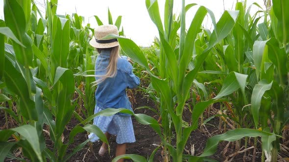 Thumbnail for Little Girl and Boy Playing in Catch Up Through Corn Field. Cute Children Running Among Maize