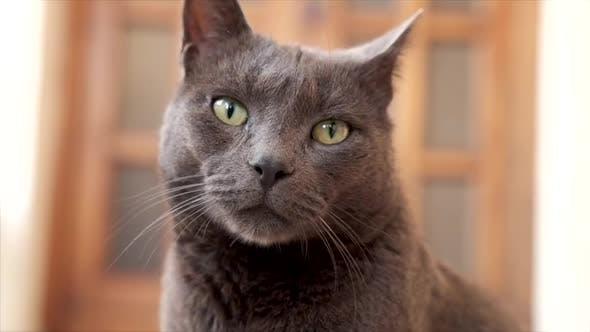 Thumbnail for Neugierige schwarze Katze sieht sich um