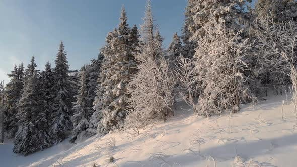 Thumbnail for Winters Snow-covered Forest. The Camera Flies Between the Trees Covered in Snow