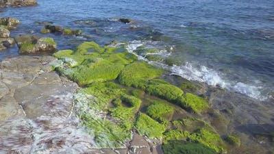 Seaweed on Sea Coast