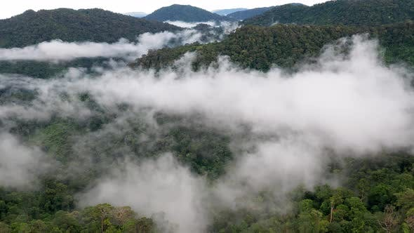 Thumbnail for Aerial drone view of mist and clouds hanging over mountainous tropical rainforest