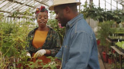 Afro-American Man Working in Greenhouse with Wife
