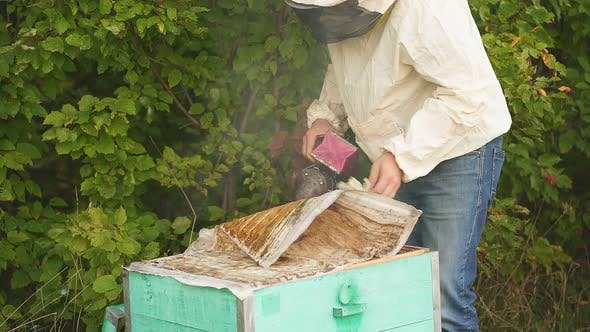 Beekeeper Opens Beehive. Apiculturist Working on Apiary with Hives