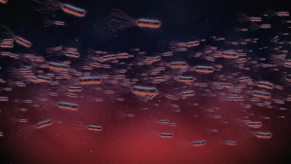 Thumbnail for Flow Of Bacteria