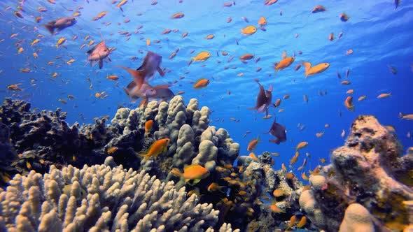 Thumbnail for Underwater Scene Colorful World