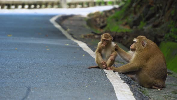 Thumbnail for Monkey Is Sitting on The Road in The Park. Asia, Tropical Forest, National Park