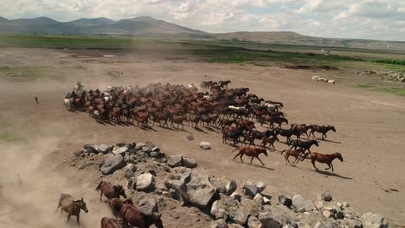 Thumbnail for Horse Herd Is Running