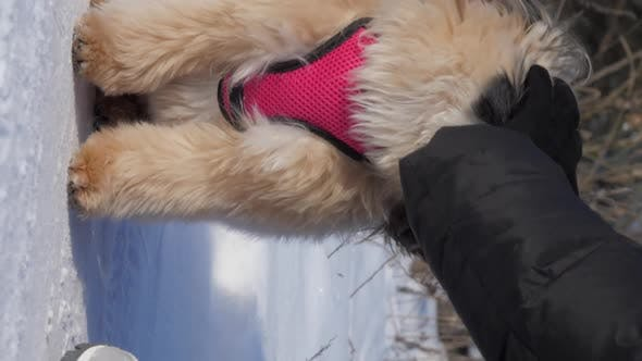 Dog Owner in Black Winter Coat and Gloves Pets Animal