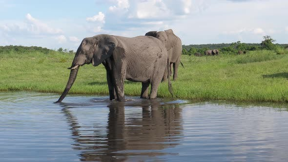 Thumbnail for Two elephants drinking water from a lake