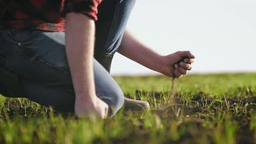 Organic Gardening Agriculture