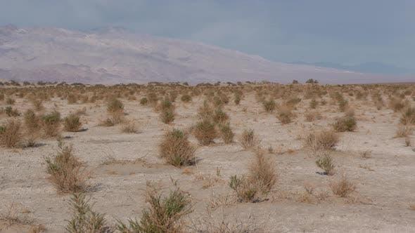 Thumbnail for Desert Death Valley Dry Shrubs in Death Valley National Park California