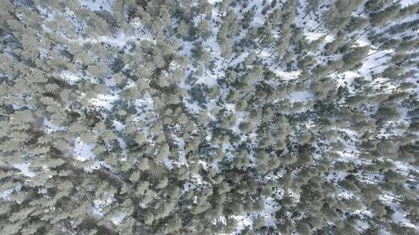Rime on Trees in the Overhead Forest
