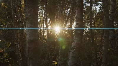 Anamorphic Sunset in the Woods