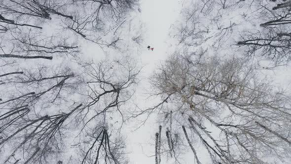 Cover Image for Aerial: Man and Woman Running Through Woods in Winter Time