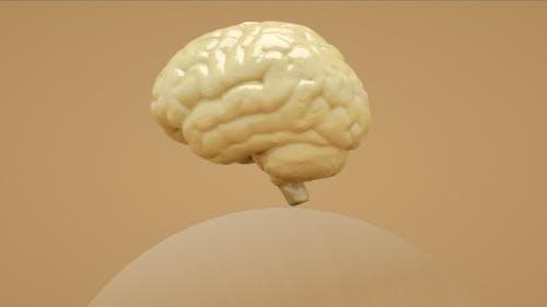 Melting Brain
