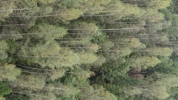 Thumbnail for Vue aérienne vidéo verticale des arbres dans la forêt