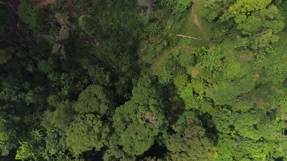 Thumbnail for Top View At Jungle