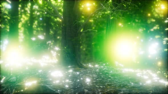 Thumbnail for Firefly Flying in the Forest