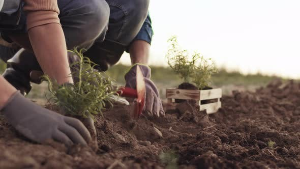 Thumbnail for People Planting Seedling in the Field