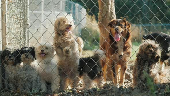 Thumbnail for A Group of Dogs Looking Through the Nursery Net