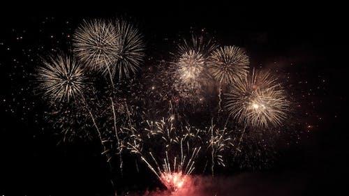 Firework New Year